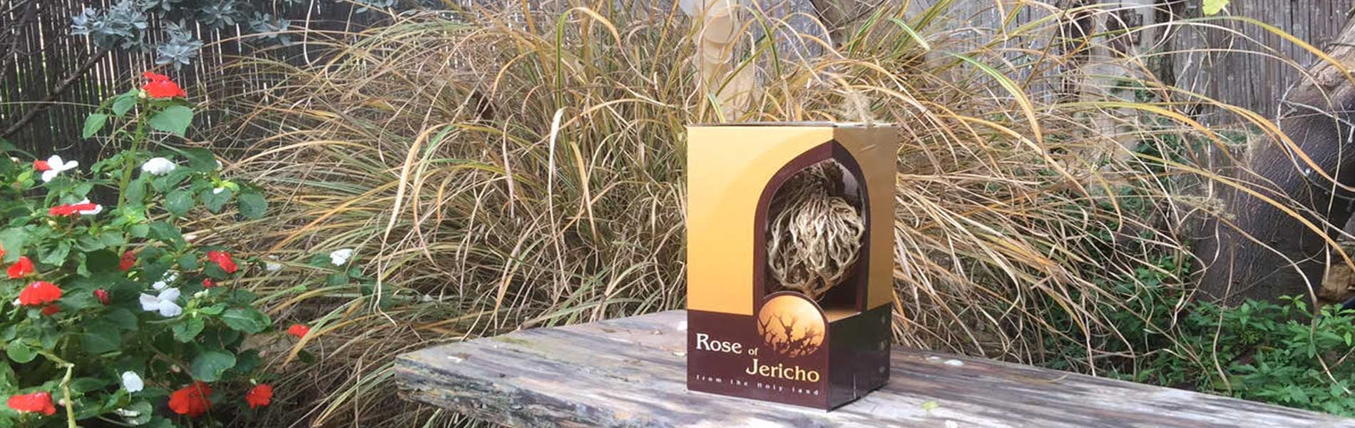 About us the real Rose of Jericho
