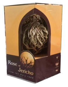 The real Rose of Jericho - Anastatica hierochuntica